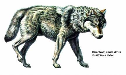 الموسوعة الكاملة للكلبيات Wolf